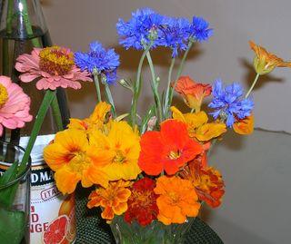 FlowerCentral2