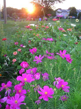 GardenSunset