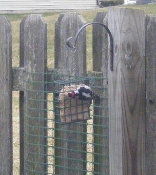 Woodpecker3.22.11