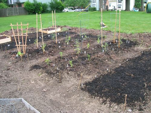 June2011Planted