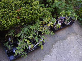 PlantsWaiting