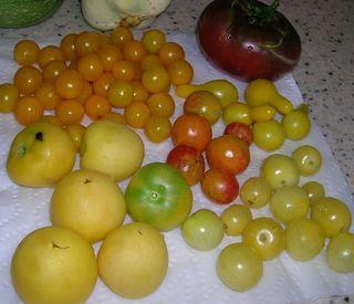 8.11.11 Tomatoes