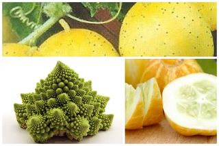 Romanesco.lemon
